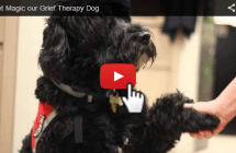 Our Therapy Dog Magic